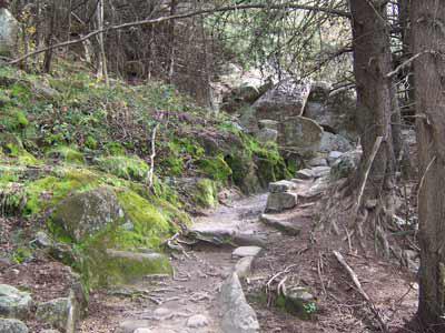 20070227203354-bosque2.jpg